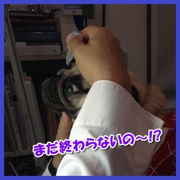 IMG_3103-1_20151120012450892.jpg