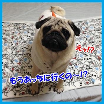 IMG_4500-1.jpg