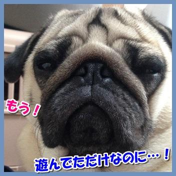 IMG_8421-1_2015120322374587f.jpg
