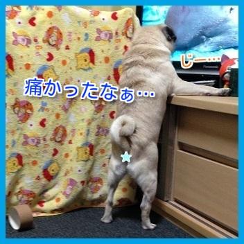 IMG_9524-1_20151112221951ae4.jpg