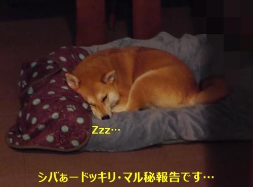 1寝てます